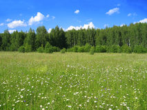 Summer landscape. Fields, forest, the blue sky and white clouds Royalty Free Stock Image
