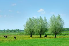 Free Summer Landscape Royalty Free Stock Photo - 4543195
