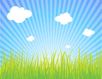 Summer landscape. Vector green grass on blue sky with white clouds Stock Images