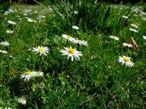 Summer Landscape Royalty Free Stock Photo