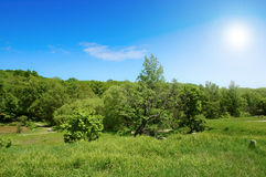 Summer landscape. Summer landscape with bright sun and blue sky Royalty Free Stock Images