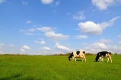 Free Summer Landscape Stock Images - 5348934