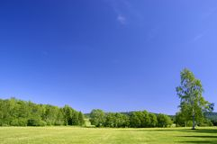 Summer Landscape. Meadow and trees under a deep blue summer sky Royalty Free Stock Image