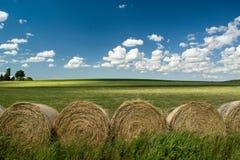 Summer Landscape Stock Photos