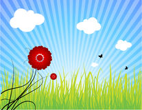 Summer landscape. Vector green grass on blue sky with white clouds, red flower and butterflies Royalty Free Stock Photos
