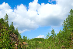 Summer landscape. Trees on hills of the Ural mountains with stony soil Stock Image