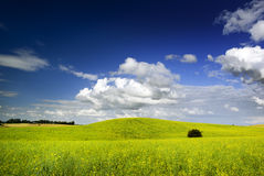 Summer landscape. Royalty Free Stock Image