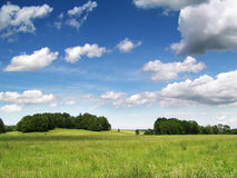Summer landscape. Fresh summer landscape - blue sky, green trees and grass Royalty Free Stock Photo