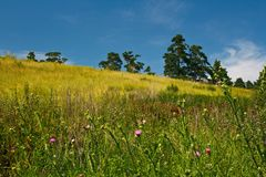 Summer landscape. With yellow and green grass on the hillside Royalty Free Stock Image