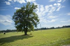 Summer landscape. With tree Royalty Free Stock Photos