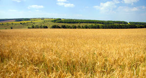 Summer Landscape A Wheat Field In Ukrainian Royalty Free Stock Photos