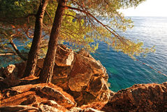Summer landscape with  Adriatic Sea and pine tree Royalty Free Stock Photography