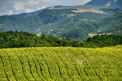 Landscape in Montefeltro near Urbania Marches, Italy Royalty Free Stock Images