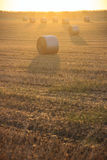 Summer landscape.Alta Murgia Nationa Park :sunrise with bales of hay. - (Apulia) ITALY Stock Image