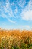 Summer Landscape And Splendid Sky. Royalty Free Stock Images