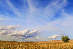 Summer landscape.Between Apulia and Basilicata:lonely tree on plowed soil.Italy Stock Photos