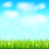 Summer landscape background, green, natural grass border with white daisies, camomile flower and small red ladybug. Blue. Sky, white clouds in the summer sky Royalty Free Stock Photo