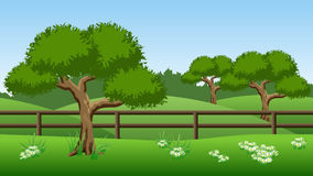 Summer landscape background with green trees, hills and chamomil Stock Image