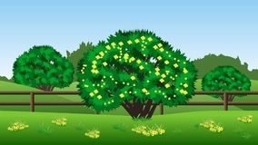 Summer landscape background with green trees, hills, grass and y. Summer landscape background. Scene with green trees, hills, grass and yellow flowers Royalty Free Stock Photos