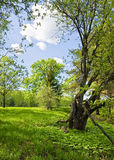 Summer landscape on the bank of Moscow canal. Stock Photos