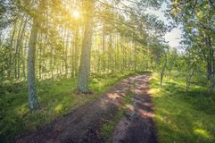 Summer landscape. Beautiful forest dirt road. fisheye distortion lens royalty free stock images