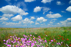 Summer landscape with the beautiful sky Stock Photo