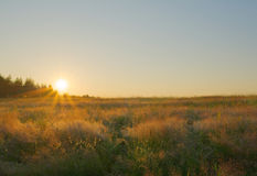 Summer landscape. Beauty meadow at dawn Royalty Free Stock Photos