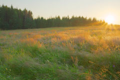 Summer landscape. Beauty meadow with forest Stock Image