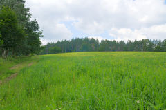 Summer landscape. Beauty meadow with forest Stock Photo