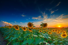 Summer landscape: beauty sunset Royalty Free Stock Photo
