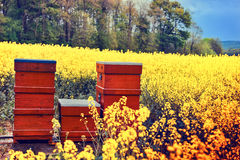 Summer landscape with beehives in a field Stock Photography