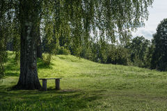 summer landscape of the birch and the bench on background green hills Stock Photos