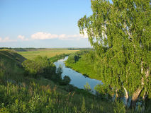 Summer landscape with a birch and small river Royalty Free Stock Image