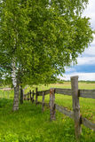 Summer landscape with birch tree and wooden fence. A summer landscape with birch and wooden picket fence with a beautiful cloudy sky royalty free stock images