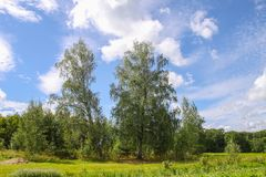Summer landscape with birch trees in Latvia, East Europe. Summer landscape in Latvia, East Europe. Two birch trees and blue sky with white clouds royalty free stock photos