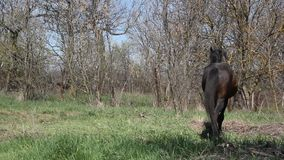 Summer landscape with black horse stock video footage