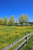 Summer landscape with blooming yellow field. Royalty Free Stock Image