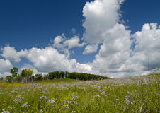Summer landscape with a blossoming meadow Royalty Free Stock Photos