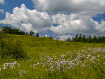 Summer landscape with a blossoming meadow Stock Photo