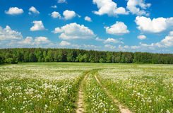 Summer  landscape with a blossoming meadow, the road and the blu Stock Photography