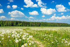 Summer  landscape with a blossoming meadow, the road and the blu Royalty Free Stock Photography