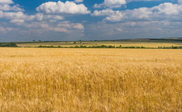 Summer landscape with blue cloudy sky and ripe wheat fields near Dnipro city Stock Photos