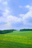 Summer landscape with blue sky. And clouds Stock Image