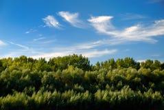 Summer landscape on blue sky background Royalty Free Stock Photos