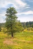 Summer landscape. Bog Royalty Free Stock Image