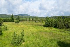Summer landscape in Bohemian Forest. Czech stock images