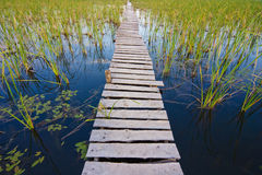 Summer landscape, a bridge across the lake Royalty Free Stock Photos
