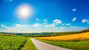 Summer landscape with bright sun. And a country road through golden cornfields royalty free stock images