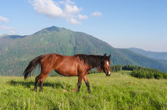 Summer landscape with a brown horse in the mountains Stock Image