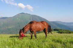 Summer landscape with a brown horse in the mountains Royalty Free Stock Photo